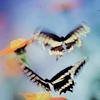 flutteringbutterflies