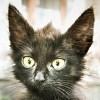 чорный коте