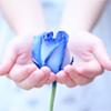 Stock - Blue Rose