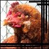 ten_gemenosha userpic