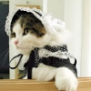Frilly Kitty
