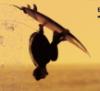 surferlife userpic