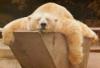 УсТаЛ!, сплю