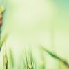 spring: grass in myst