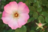 jewelsdelphina userpic