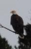 2010, Eagle