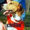 jessm78: Abby chillin'