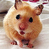Startled Mouse