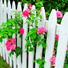 stock › rose garden
