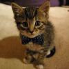 knightlycat