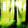 spring: sunlight forest