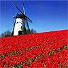 Голландия. мельница