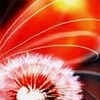 Nibelunga: dandelion