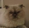dansekatzen userpic