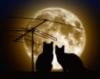ночные кошаки