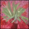 vilentine flowers