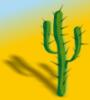 кактус1