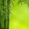 bammmbuk