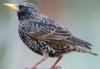 starlingfly userpic