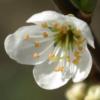 alicephilippa