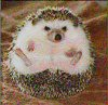 Hedgehog Sitting