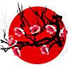 Japan. Sakura