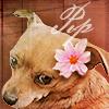 Pippin flower - annwyn55