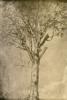e_d_young: tree