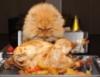 Курицекот