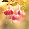 Nimi: n flower
