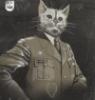 майор кот