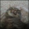 groodjorb userpic