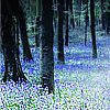 spring bluebell woods by fluidic_icons