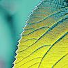 spring leaf by lollipopgrafix