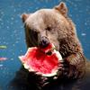 muffinbreak userpic