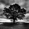 garry_show: дерево