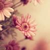 Christina: pretty daisy