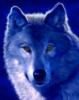 she_wolf_voron userpic