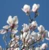 magnolia_don userpic