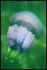 tania_meduza userpic