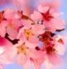 pinkcheetah717 userpic