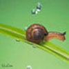 forest_snail userpic