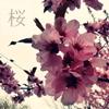 ~° Furu Hikari °~: pic#87962793