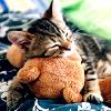 cat & teddy