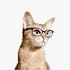 (cute) nerd cat.