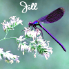 Dhamphir - Jill with dragonfly