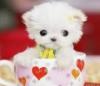 puppy, cute