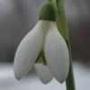 ru_flowers.livejournal.com