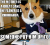 dog, meme