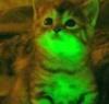 светокотик